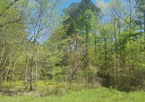 Lot 6 Satellite Circle - Fortson, Georgia 31808