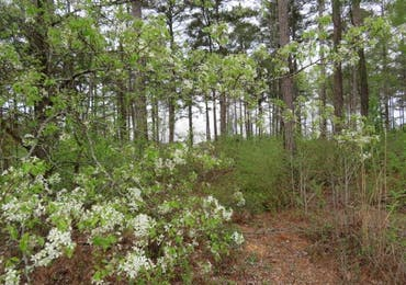 Lot 2 Block A Pintail Drive - Cataula, Georgia 31804